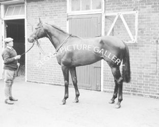 Wolver Hollow with Lester Piggott (587-01)